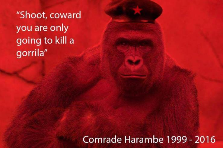 shootcowardharambe
